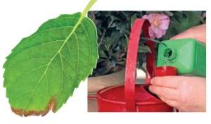 como-cuidar-el-jardin-en-abril